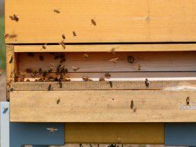 KOLIBRI Bienen gehen in die Winterpause.